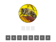 Animal Quiz - Play The Free Game Online